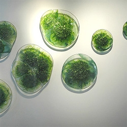 Quadruple algae growth using magnetic fields