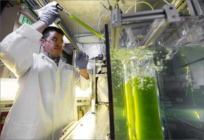 Reviving Algae from the (Almost) Dead
